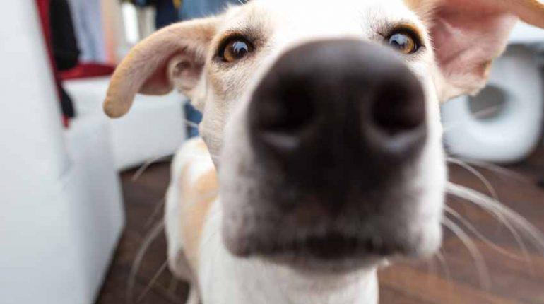 Haustiere und Brust-Krebs-Patienten/innen. Einige gilt es zu beachten